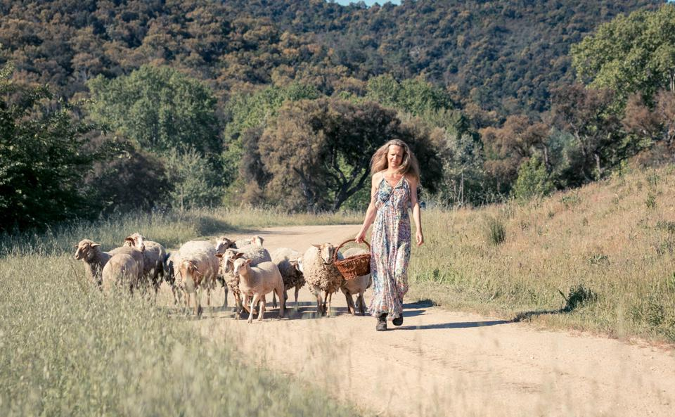 animals in the vineyard, sustainable farm, French farm