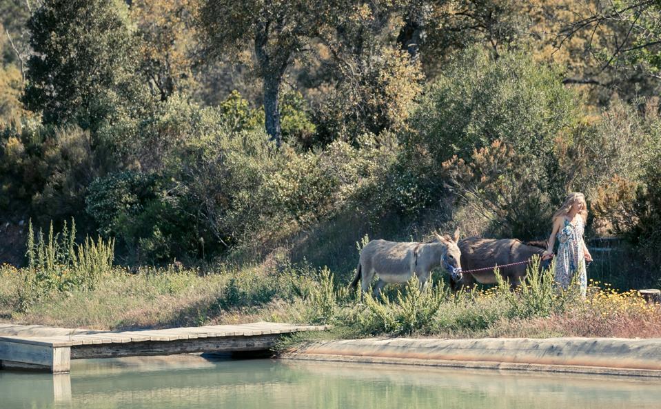 donkeys, animals and wine