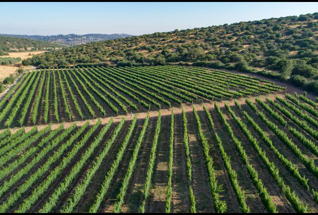 Savor Exquisite White Wines At This Winery In Israel's Judean Hills