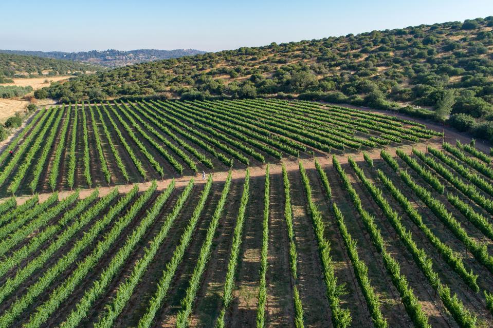 Sphera Vineyard in the Judean Hills
