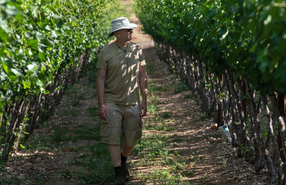 Doron in the vineyard