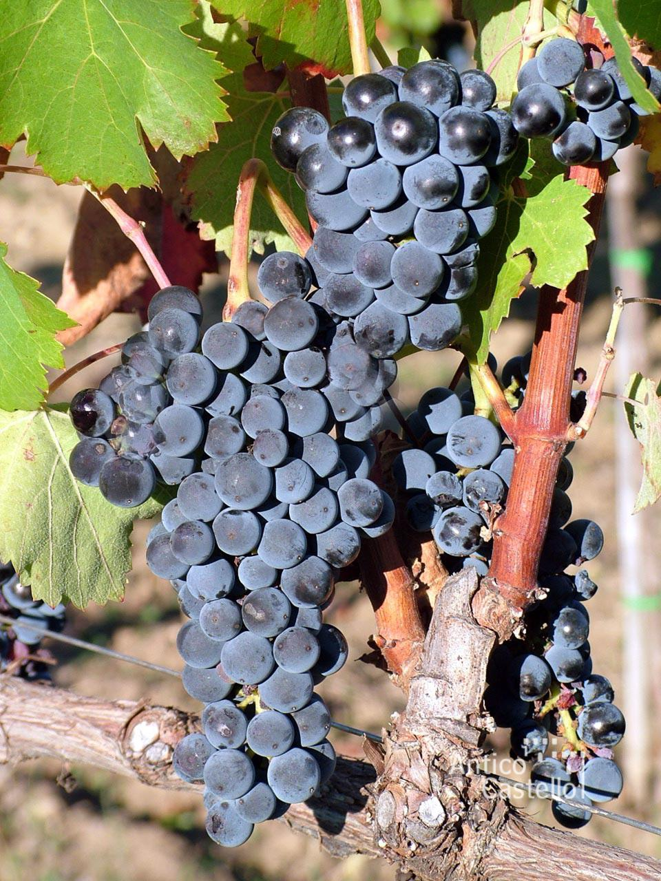 Bringing Engineering To Volcanic Wines In Campania, Italy