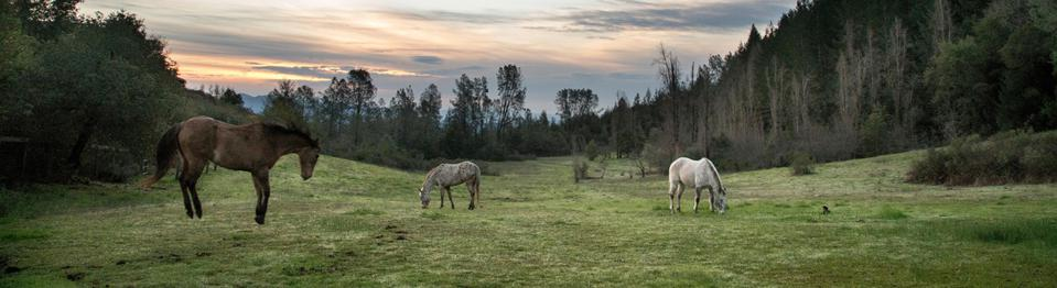 Some of the Long Meadow Ranch Pastureland for Their Horses