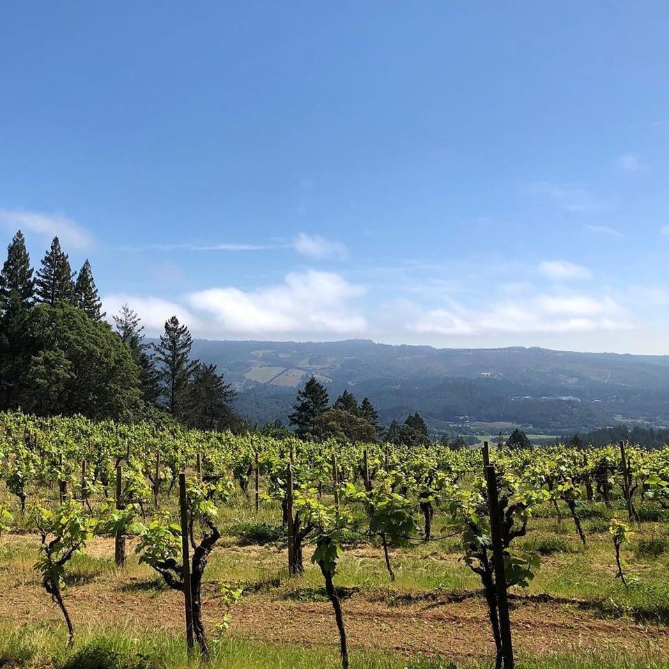 The Vineyards at Stony Hill  Photo Credit
