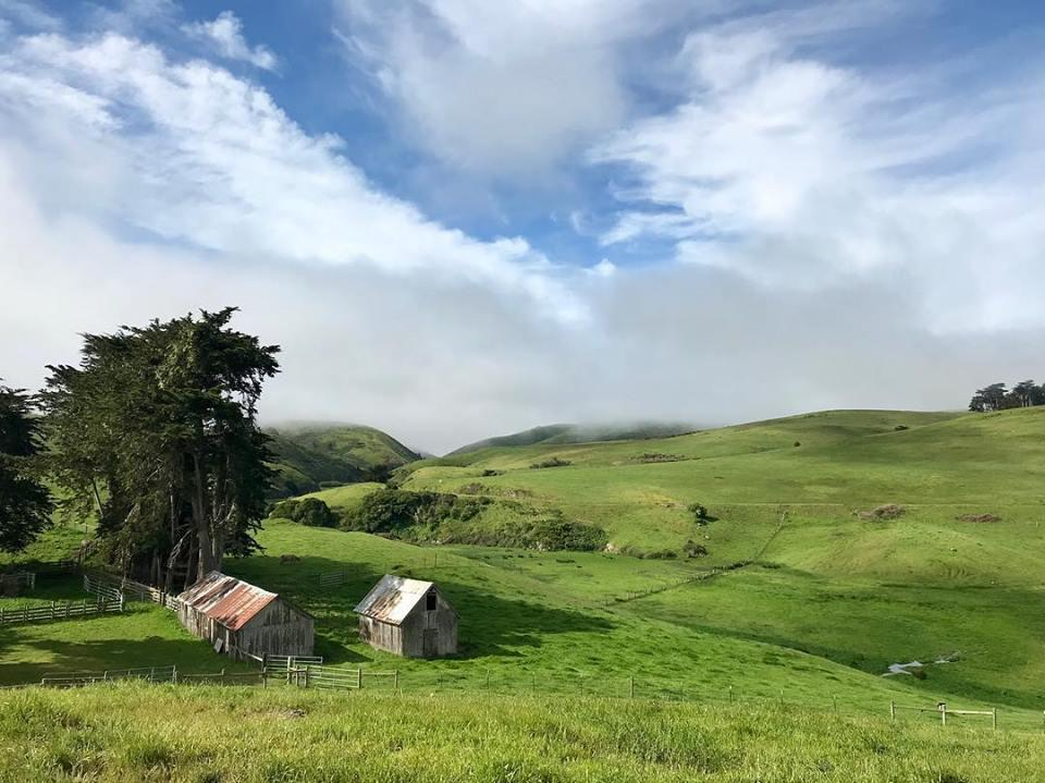 Tomales Station is Home to Long Meadow Ranch's Highland Cattle