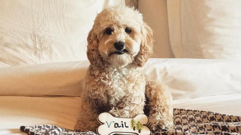 There are many Vail hotels that welcome pets with open arms.