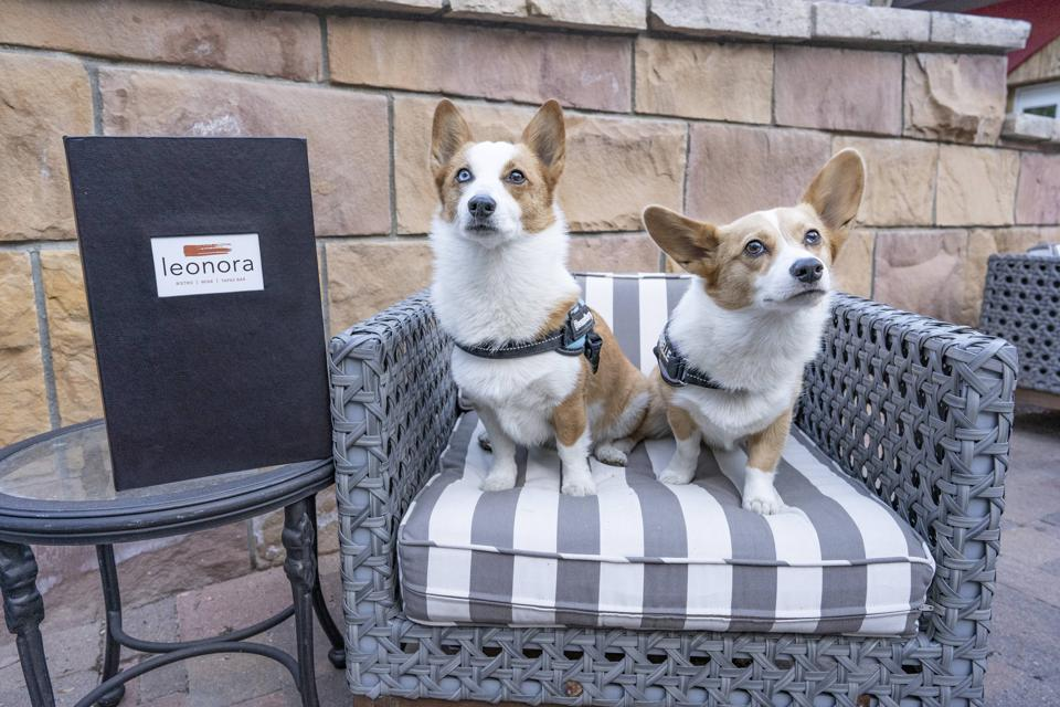 The Sebastian-Vail recently launched an event for four-legged guests.