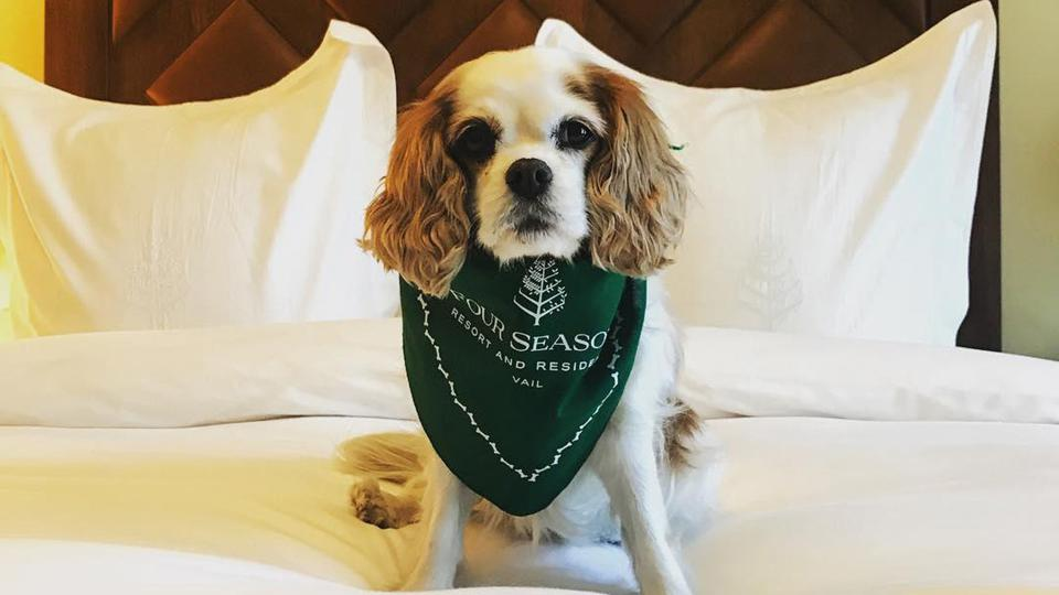 Dogs can also enjoy signature Four Seasons Vail comfort.