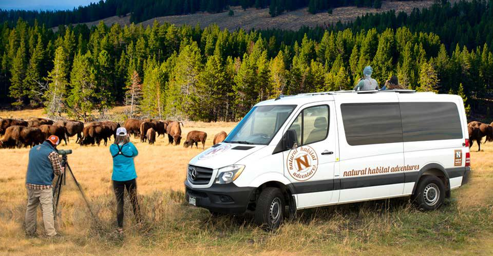 Natural Habitat guests view wildlife in Yellowstone.
