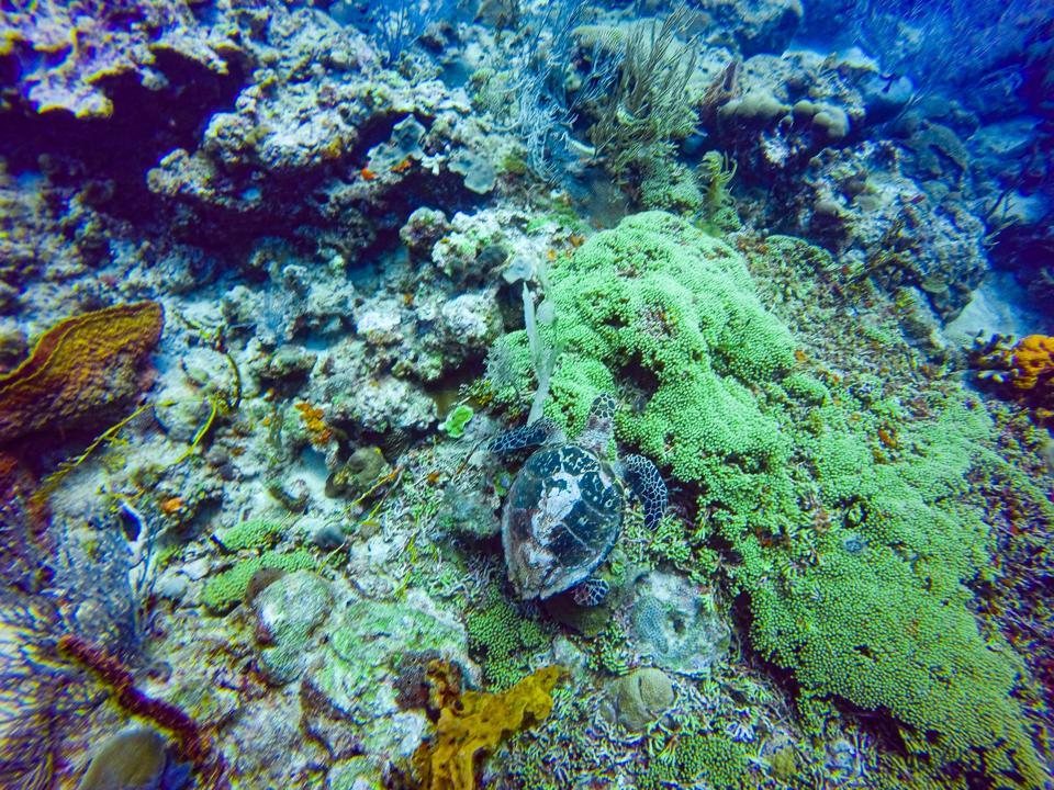 turtle scuba gopro