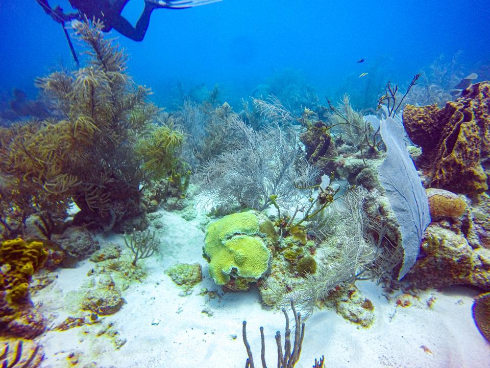 Barbados reef