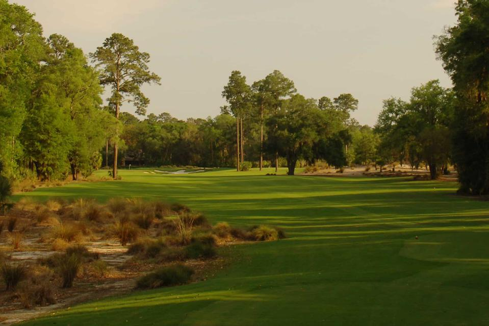 Golf course lines with trees