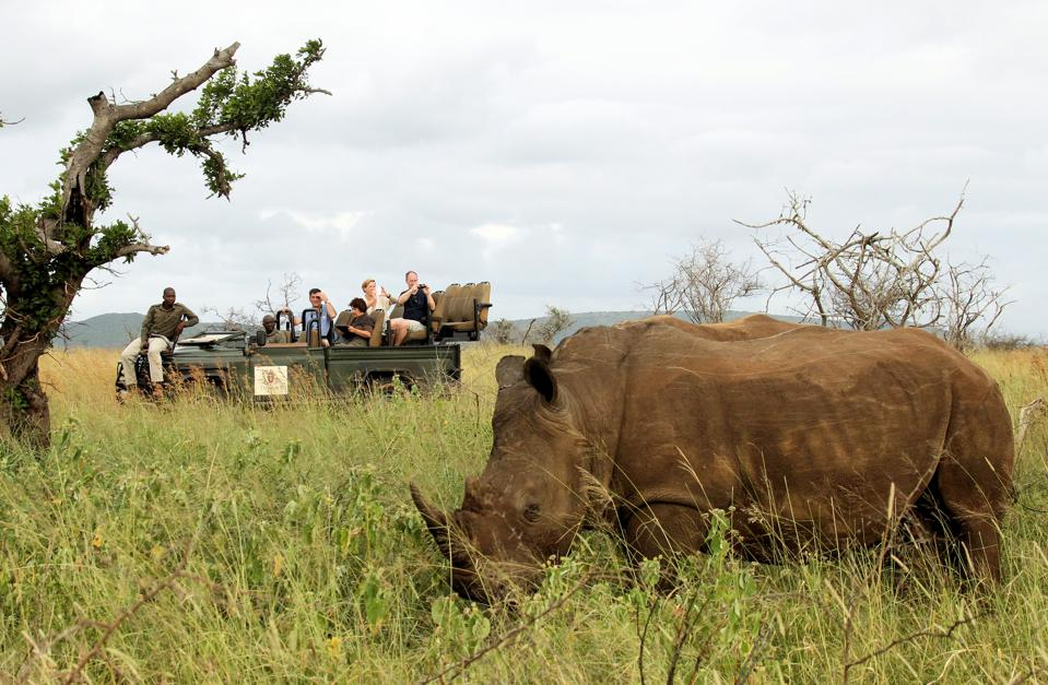 Lucky guests on a Thanda Safari game drive seeing a rhino