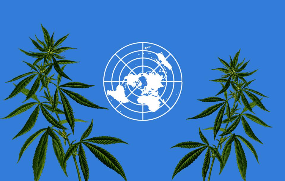 U.N. And Cannabis