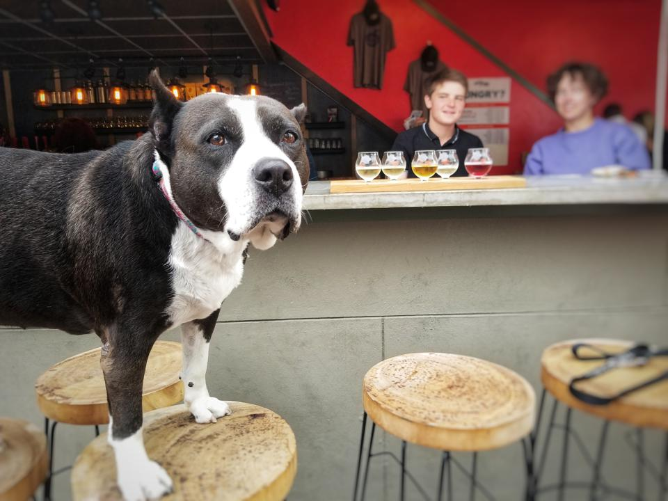 Dog at Meriwether Cider House in Boise, Idaho