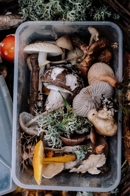 Mushrooms for Fall Cuisine