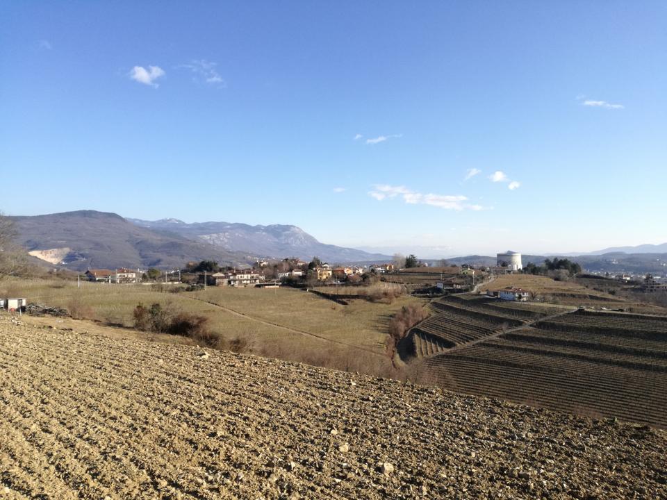 Collines d'Oslavia et terres de ponca, avec les vignobles de Ribolla Gialla du vignoble Primosic