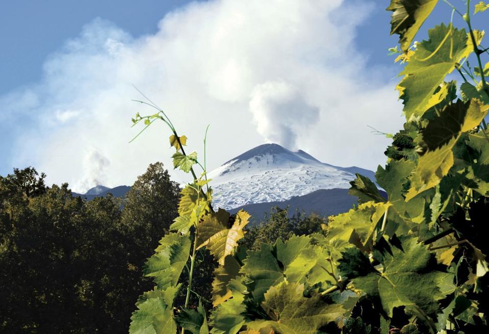 Mt Etna Grapevines