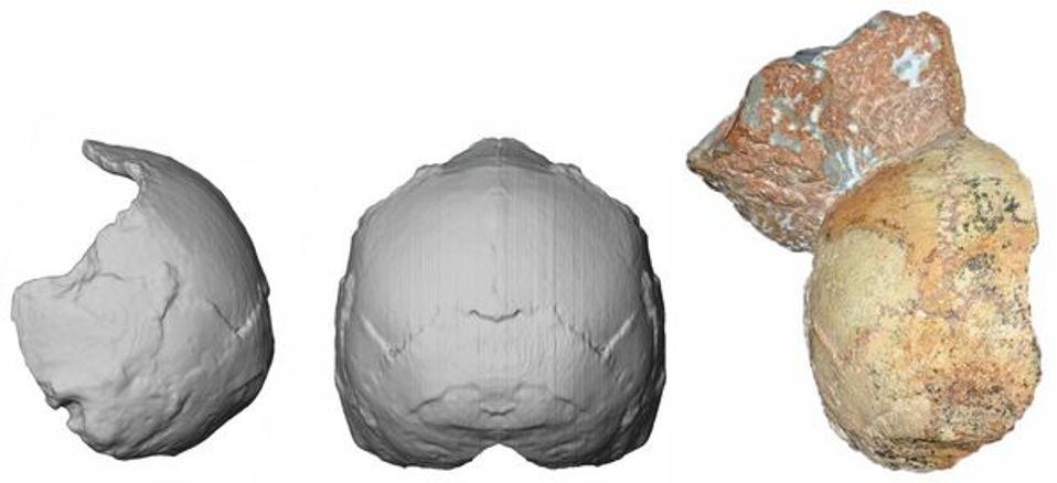 The Apidima 1 partial cranium (right) and its reconstruction (left)