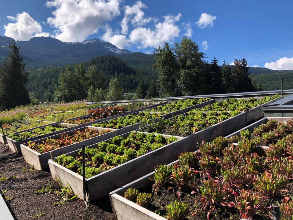 Reap What They Sow At These Amazing Vancouver Hotel Rooftop Gardens
