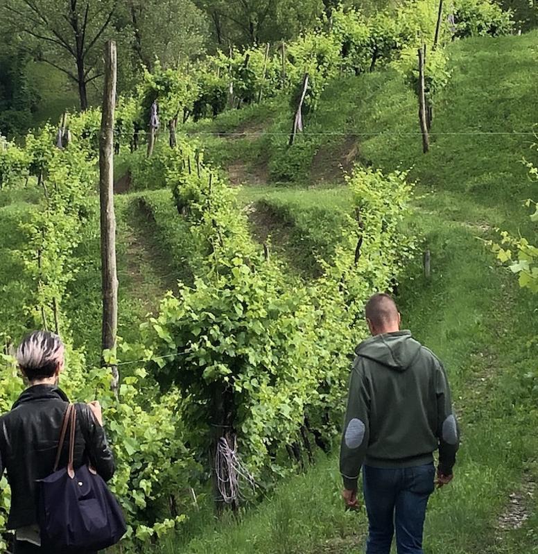 Bele Casel Vineyard