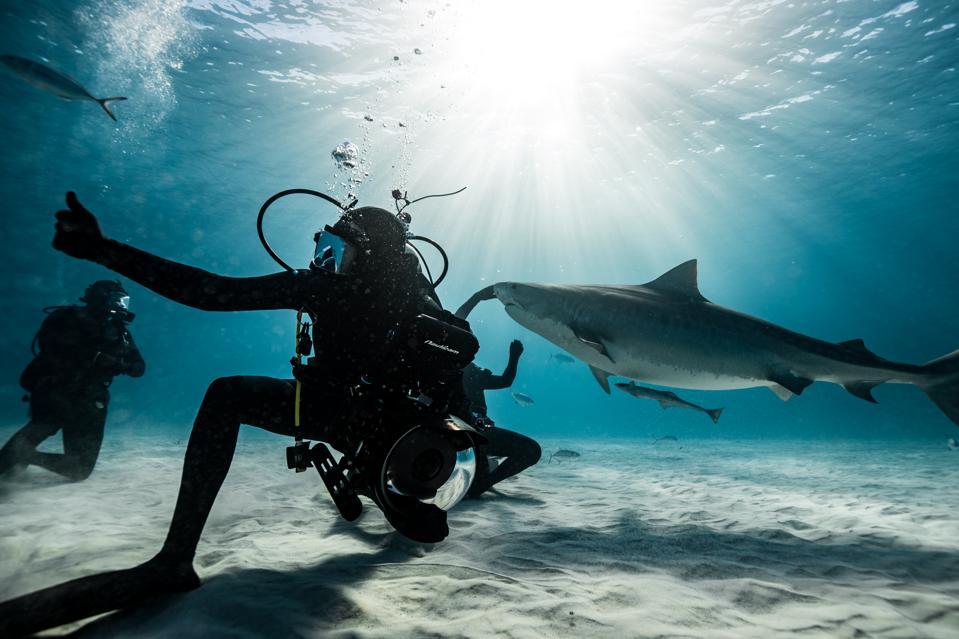 Award-winning cinematographer and shark expert Joe Romeiro. Shark Week 2019.