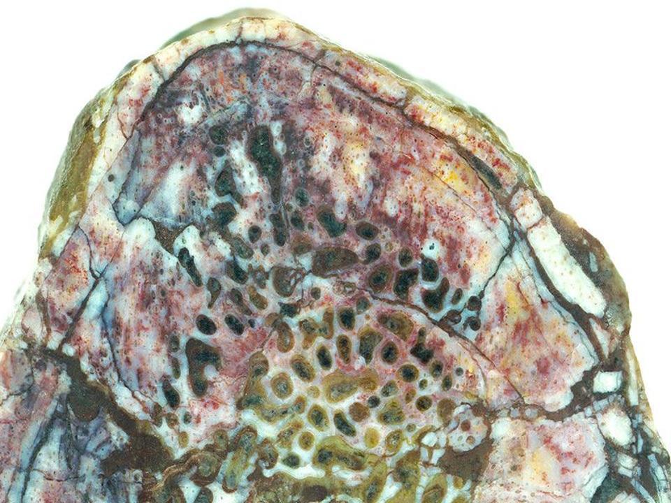 Cross section of dinosaur rib bone.