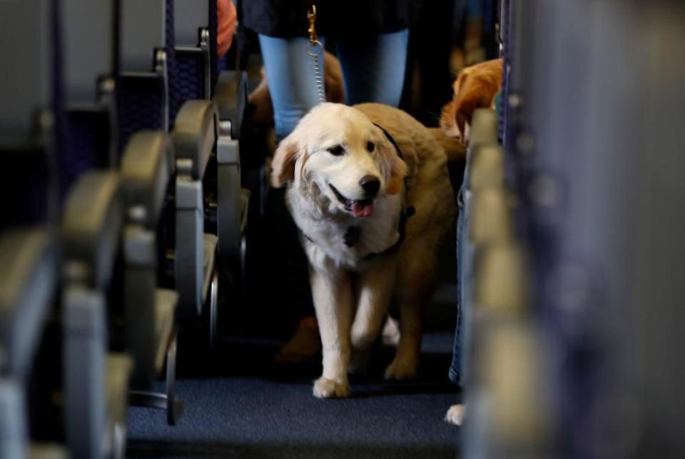 Dogs on a plane