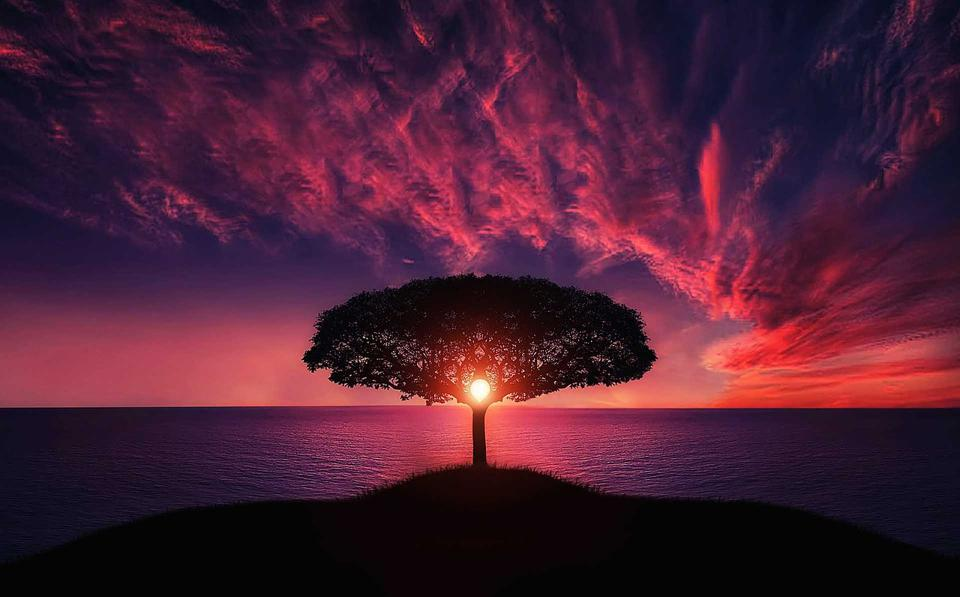 A lone tree at sunset reminds us of how grief and loss affects us all