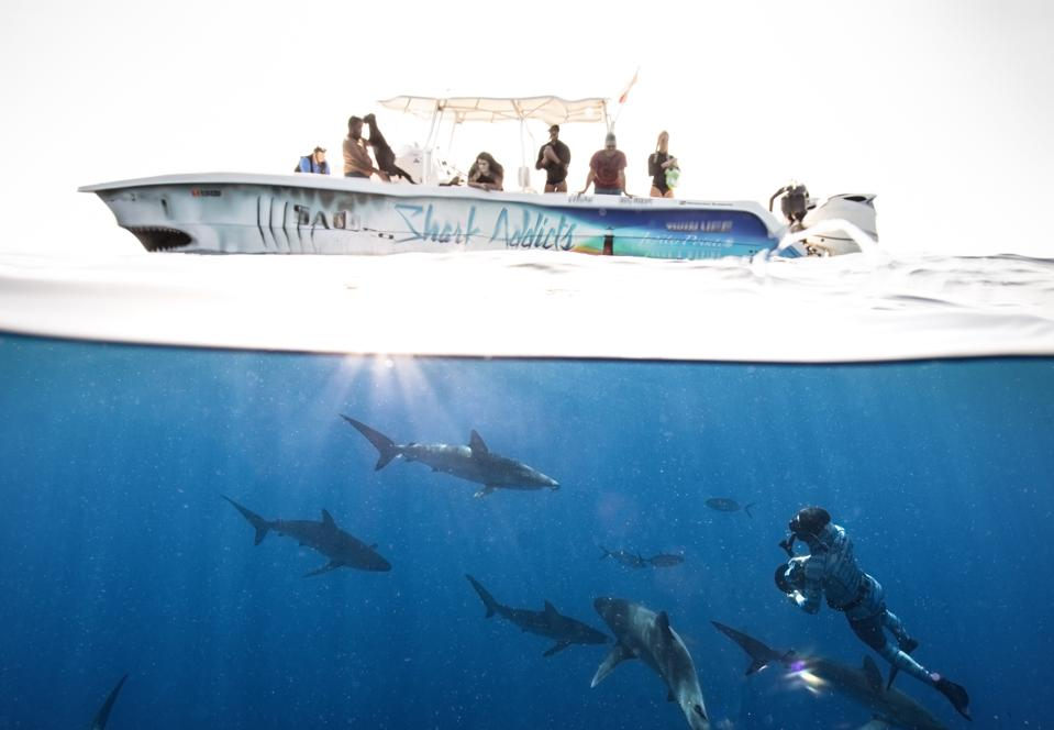 Five Bucket List Shark Diving Experiences Done Right