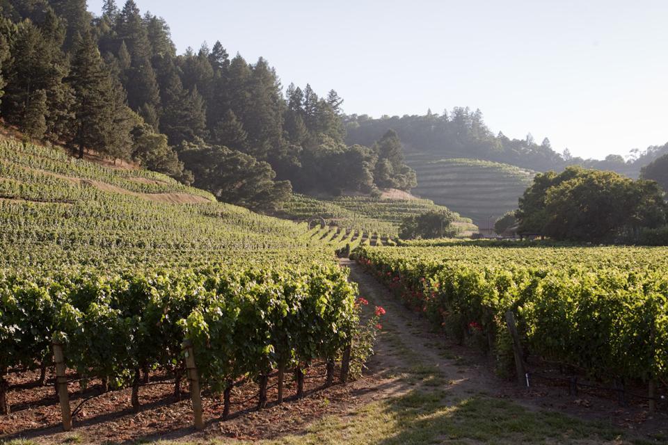 Pine Ridge Vineyards - 40 Years of Remarkable Napa Valley Cabernet