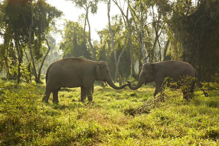 Elephant Tourism Done Right: Anantara in Thailand