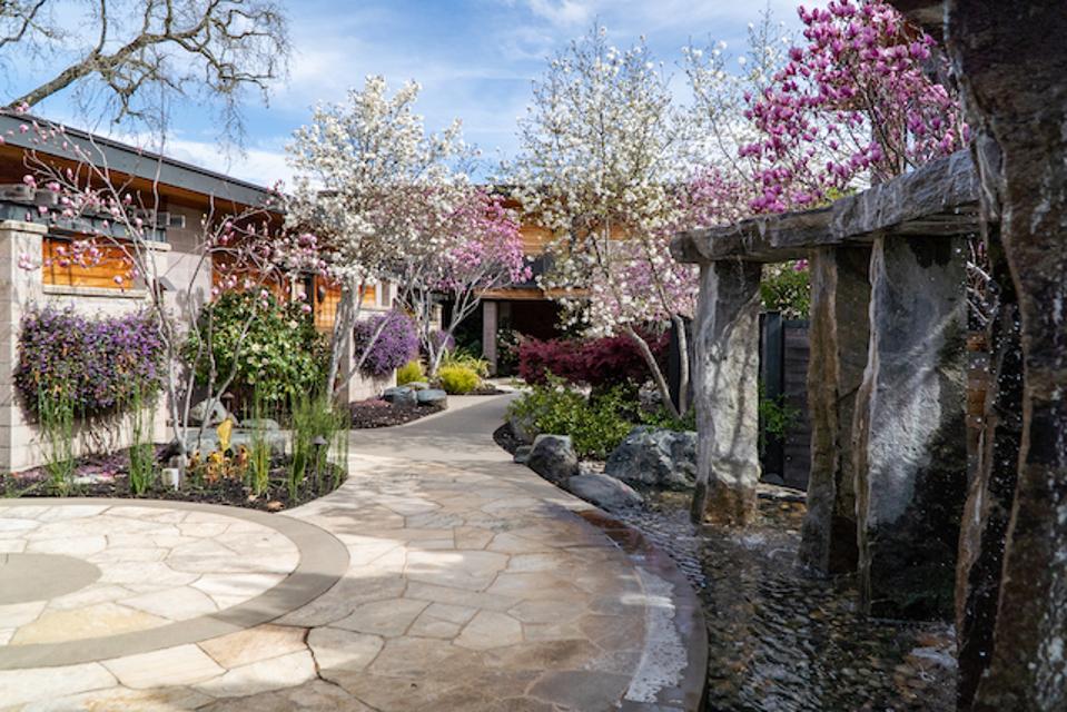Magnolia Grove in bloom