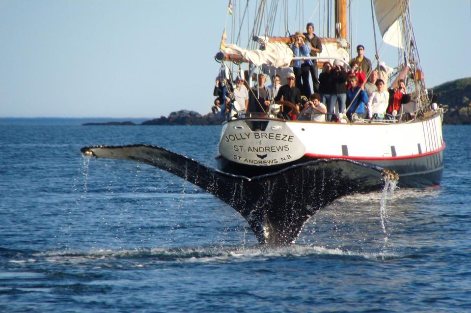 St. Andrews Jolly Breeze whale watching