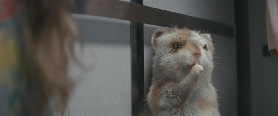 Kia Soul Hamster >> The Kia Soul Is More Than Just A Hamster Hauler