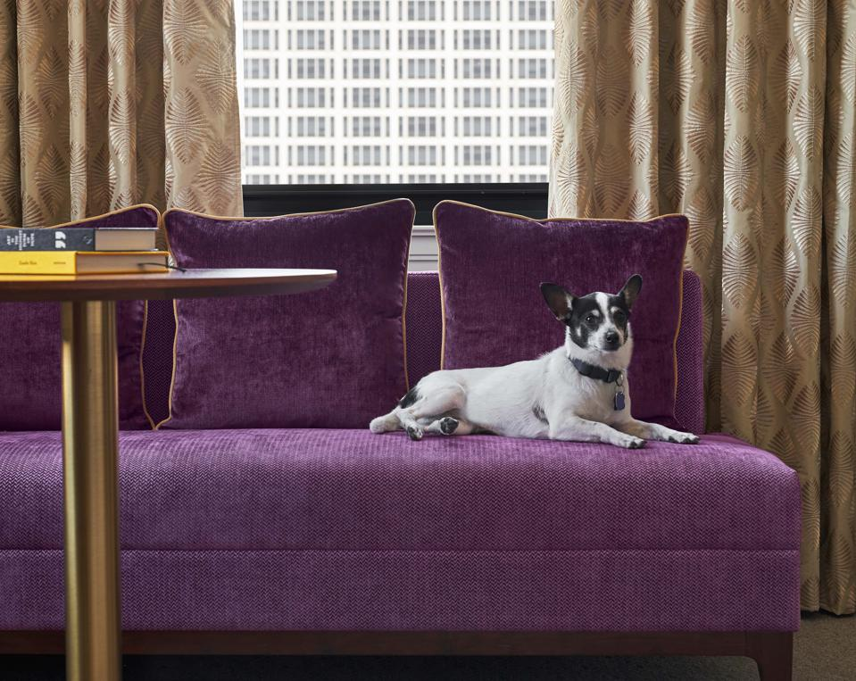 21c Museum Hotel Nashville, a pet-friendly hotel