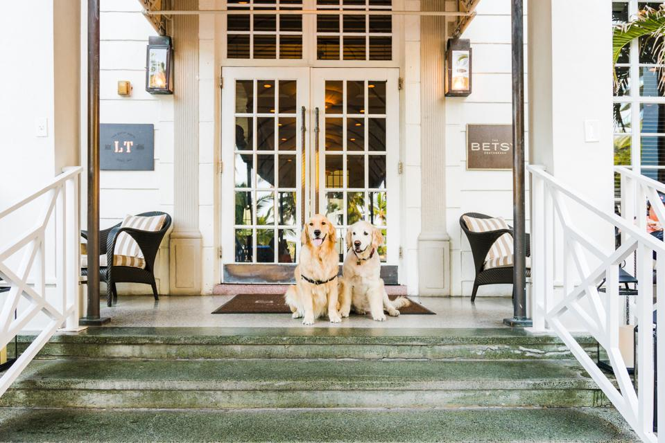 The Betsy Hotel, a pet-friendly hotel
