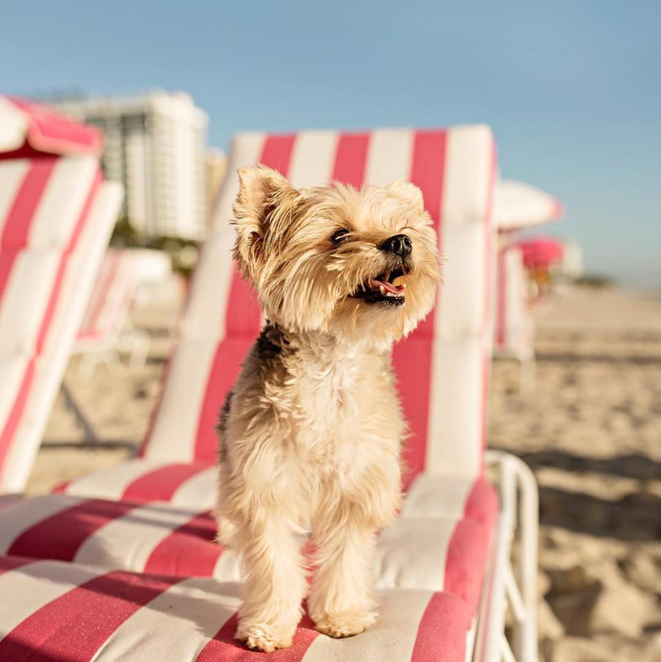 W South Beach, a pet-friendly hotel