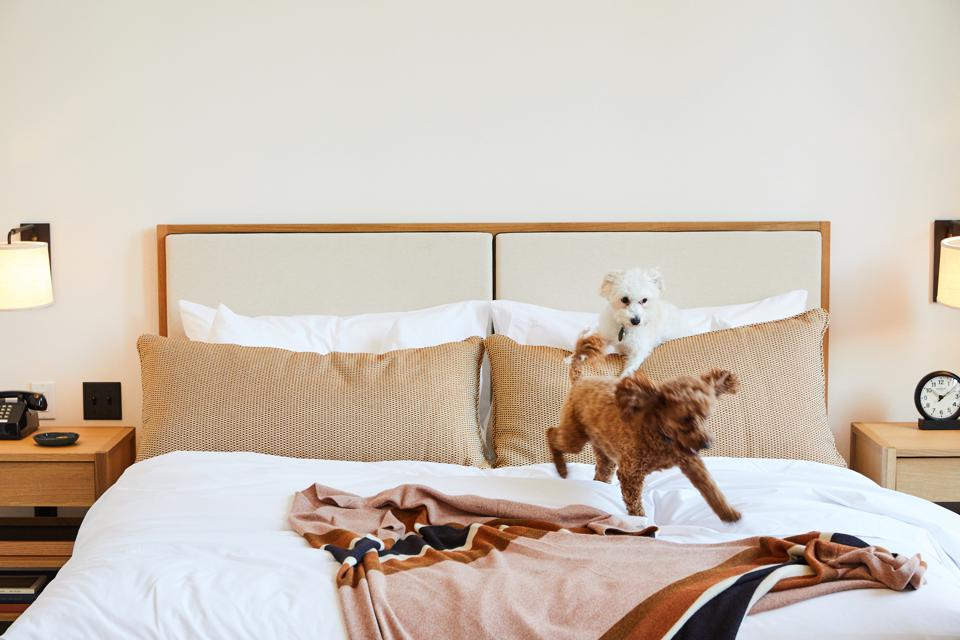 Puppies at Shinola Hotel