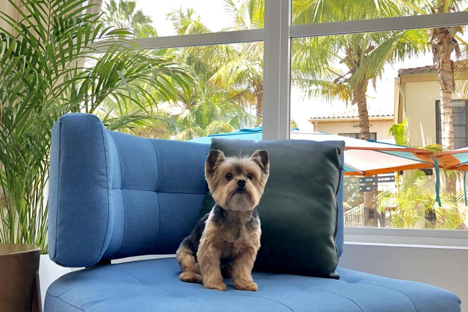Dog at Generator Miami