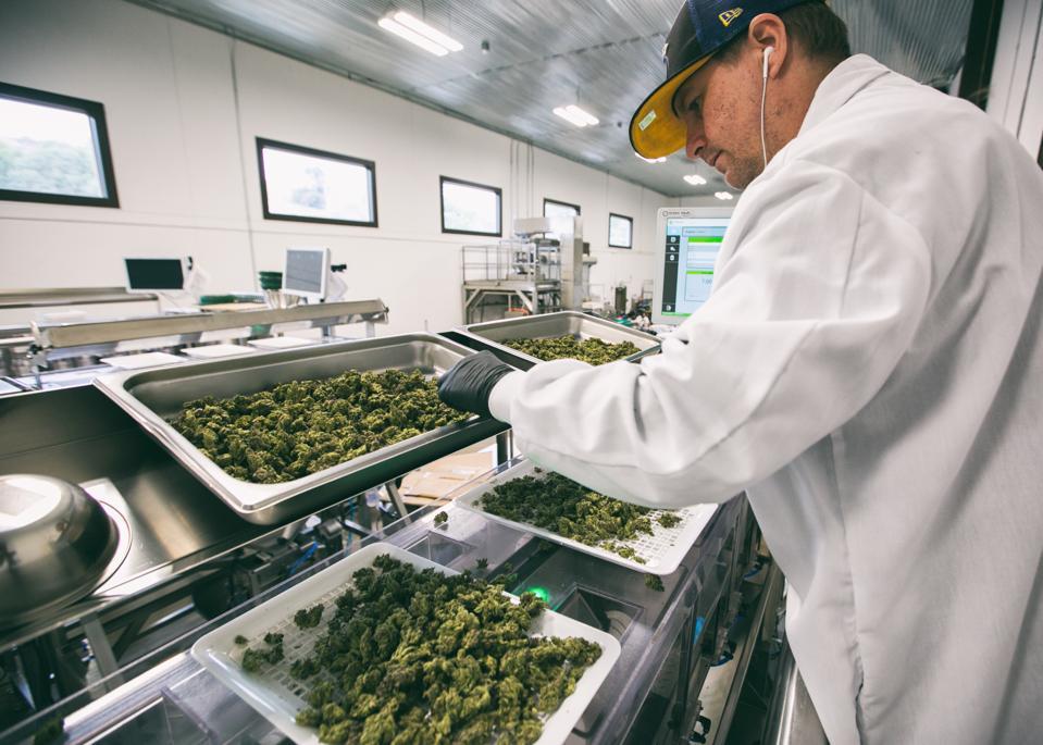 Flow Cannabis Institute