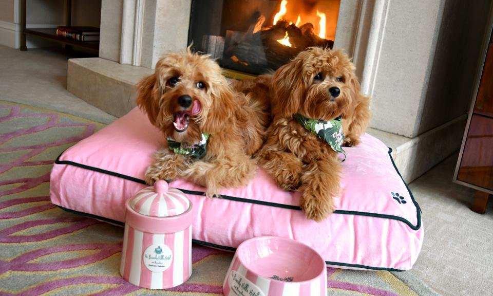 Best Pet Friendly Hotels
