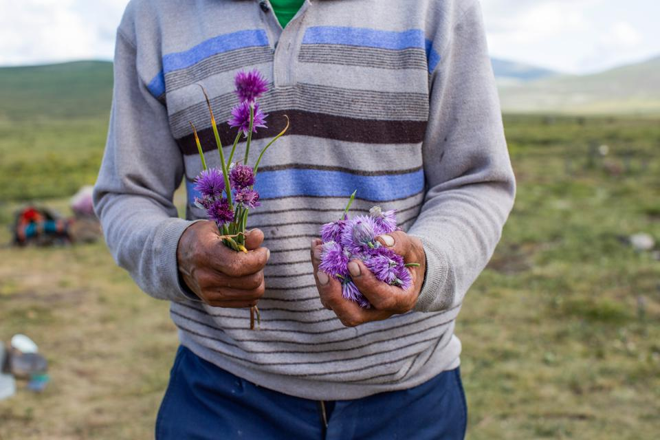 Chive Flowers, Mongolia