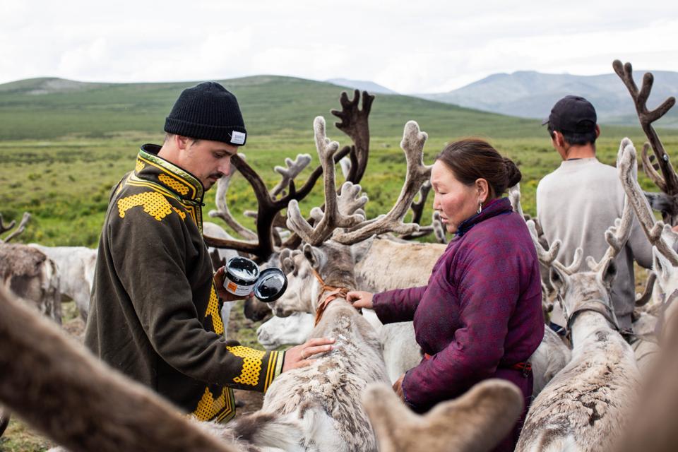 Reindeer in Mongolia