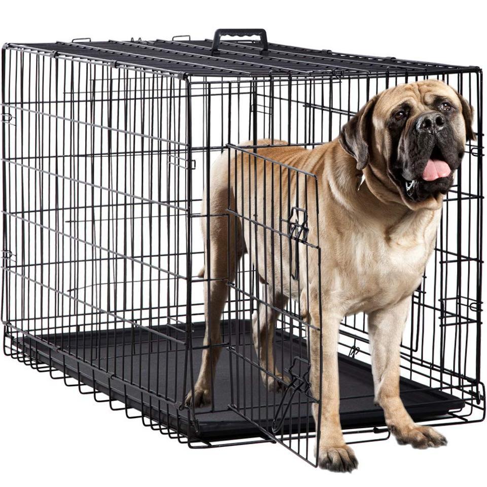 Dog essentials