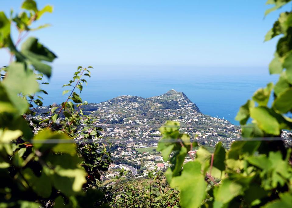 Wineries in Ischia