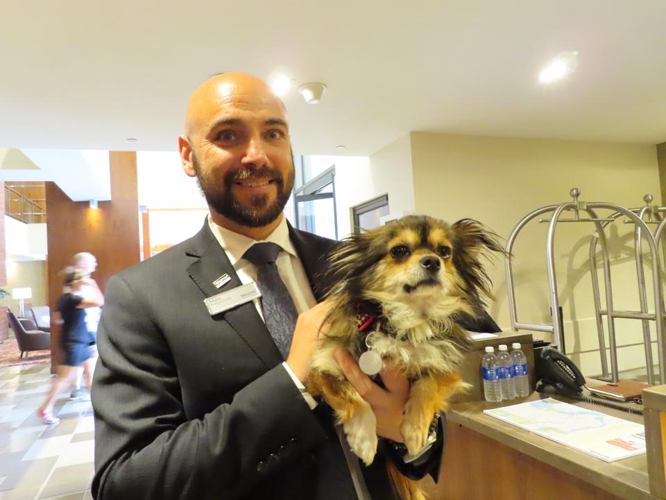 Foster Dog with Guest Services Staff Member at Westin Ottawa