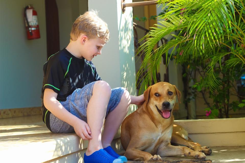 Bluefields Bay Villas Rescued Dog