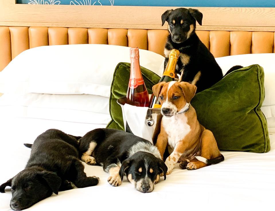 Prosecco & Puppies at Kimpton Hotel Monaco Denver