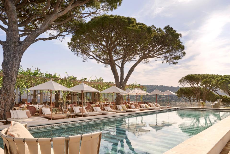 Pool under umbrella pine trees